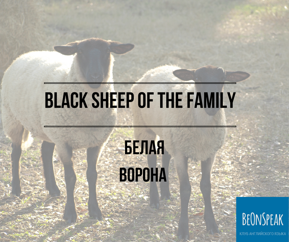 black sheep of the family (2)
